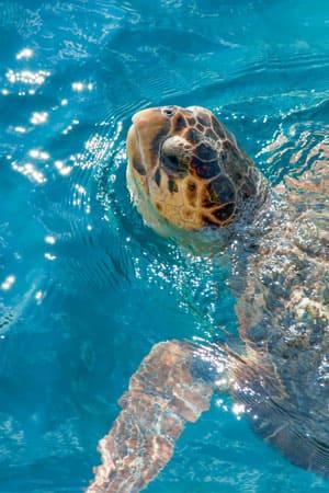 tartarughe-marine-lampedusa